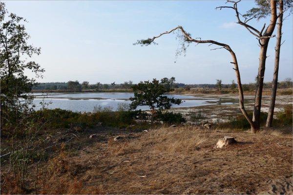 Ven van natuurreservaat De Malpie