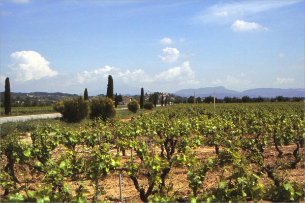 Wijngaarden in de Vaucluse.